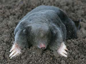 A mole. Not mine.