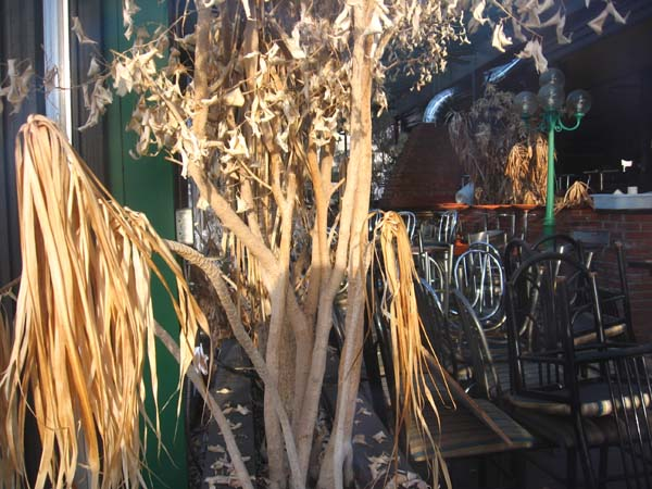 Some of the dead jungle inside.